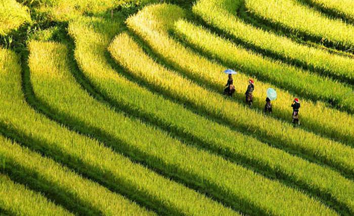 niche market in Vietnam